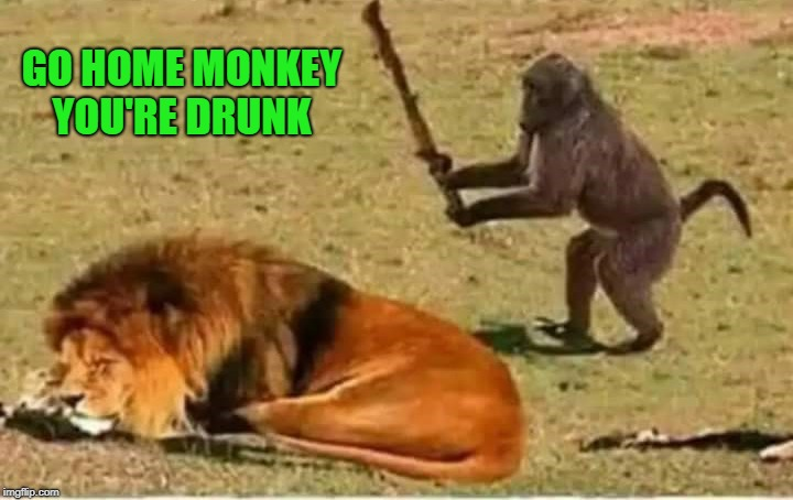 go home you're drunk | GO HOME MONKEY YOU'RE DRUNK | image tagged in drunk monkey,lion,stupid | made w/ Imgflip meme maker