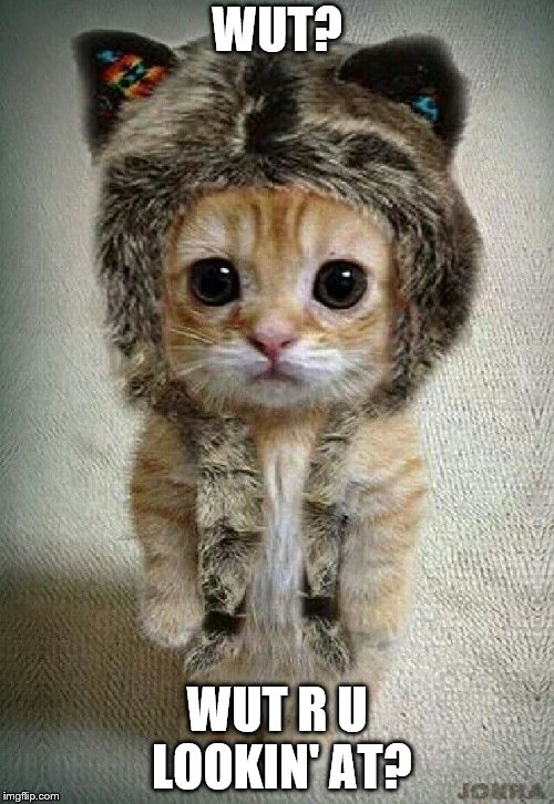 Hat Cat | WUT? WUT R U LOOKIN' AT? | image tagged in cat,funny cats,hats | made w/ Imgflip meme maker
