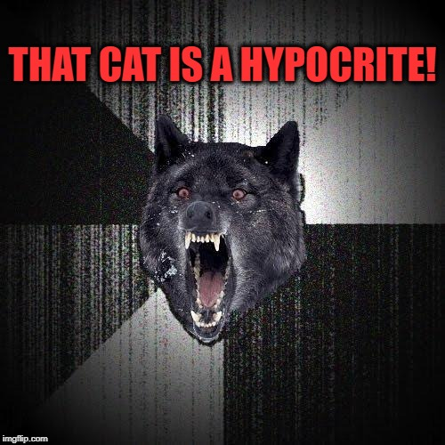 Insanity Wolf Meme | THAT CAT IS A HYPOCRITE! | image tagged in memes,insanity wolf | made w/ Imgflip meme maker