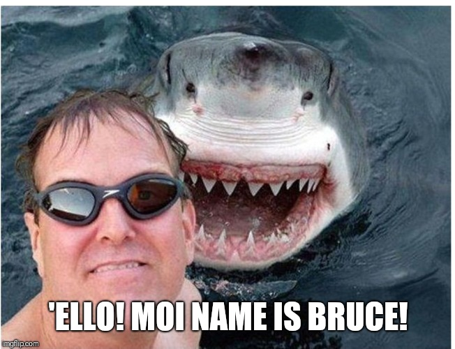 Smiling shark | 'ELLO! MOI NAME IS BRUCE! | image tagged in shark | made w/ Imgflip meme maker