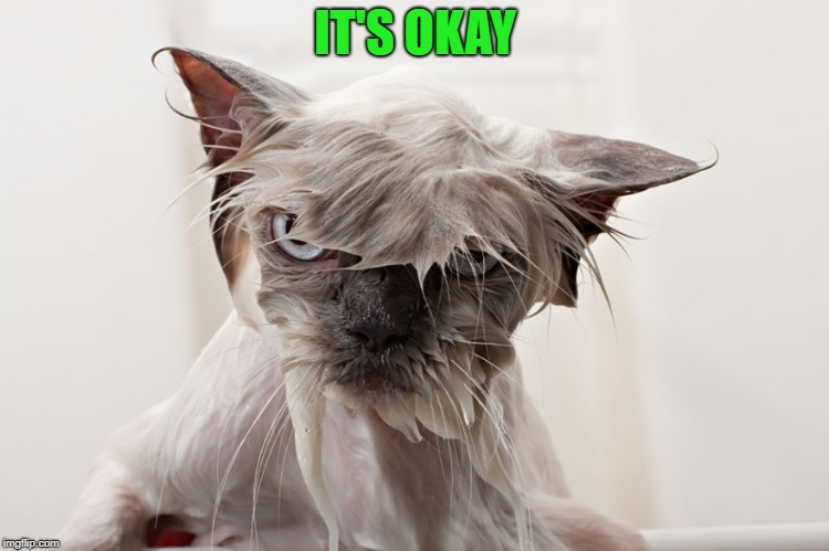 cat | IT'S OKAY | image tagged in cat | made w/ Imgflip meme maker