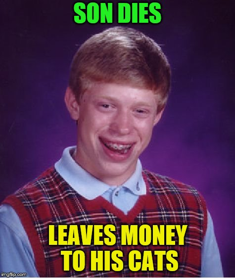 Bad Luck Brian Meme | SON DIES LEAVES MONEY TO HIS CATS | image tagged in memes,bad luck brian | made w/ Imgflip meme maker