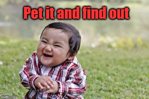 Evil Toddler Meme | Pet it and find out | image tagged in memes,evil toddler | made w/ Imgflip meme maker