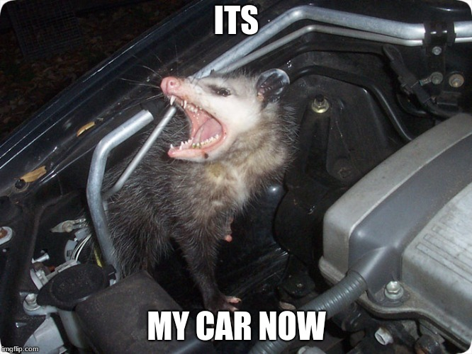 Animals in cars | ITS MY CAR NOW | image tagged in animal rights | made w/ Imgflip meme maker
