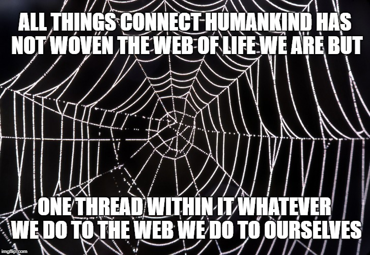 Chief Seattle's Spider Web | ALL THINGS CONNECT HUMANKIND HAS NOT WOVEN THE WEB OF LIFE WE ARE BUT ONE THREAD WITHIN IT WHATEVER WE DO TO THE WEB WE DO TO OURSELVES | image tagged in native american,spider web,chief seattle,life,ourselves,web | made w/ Imgflip meme maker