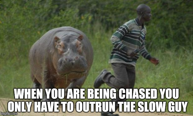 hippo chase | WHEN YOU ARE BEING CHASED YOU ONLY HAVE TO OUTRUN THE SLOW GUY | image tagged in hippo chase | made w/ Imgflip meme maker