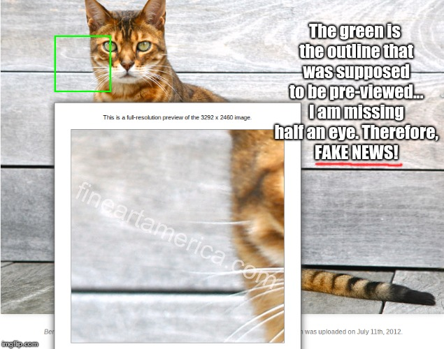 You had one job, Bill. | The green is the outline that was supposed to be pre-viewed... I am missing half an eye. Therefore, FAKE NEWS! | image tagged in memes,funny,cats,you had one job | made w/ Imgflip meme maker