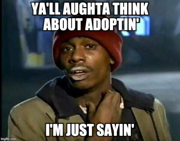 Y'all Got Any More Of That Meme | YA'LL AUGHTA THINK ABOUT ADOPTIN' I'M JUST SAYIN' | image tagged in memes,y'all got any more of that | made w/ Imgflip meme maker