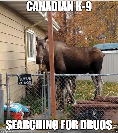 CANADIAN K-9 SEARCHING FOR DRUGS | image tagged in bullwinkle dog | made w/ Imgflip meme maker
