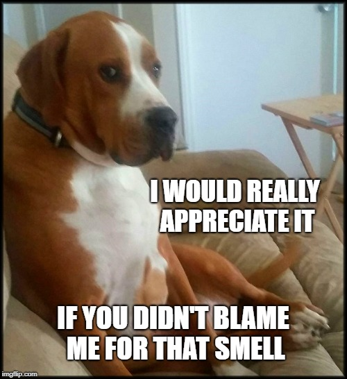 Don't blame the poor dog...  | I WOULD REALLY APPRECIATE IT IF YOU DIDN'T BLAME ME FOR THAT SMELL | image tagged in dog,dad joke dog,smell,smelly,bad smell,farts | made w/ Imgflip meme maker