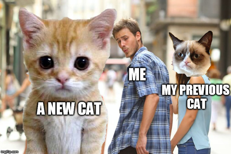 meow | A NEW CAT ME MY PREVIOUS CAT | image tagged in grumpy cat,cute kitten,sad kitten,kim jong-un,distracted boyfriend | made w/ Imgflip meme maker