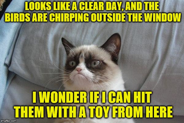 Not a morning cat | LOOKS LIKE A CLEAR DAY, AND THE BIRDS ARE CHIRPING OUTSIDE THE WINDOW I WONDER IF I CAN HIT THEM WITH A TOY FROM HERE | image tagged in memes,grumpy cat bed,grumpy cat,bad morning | made w/ Imgflip meme maker