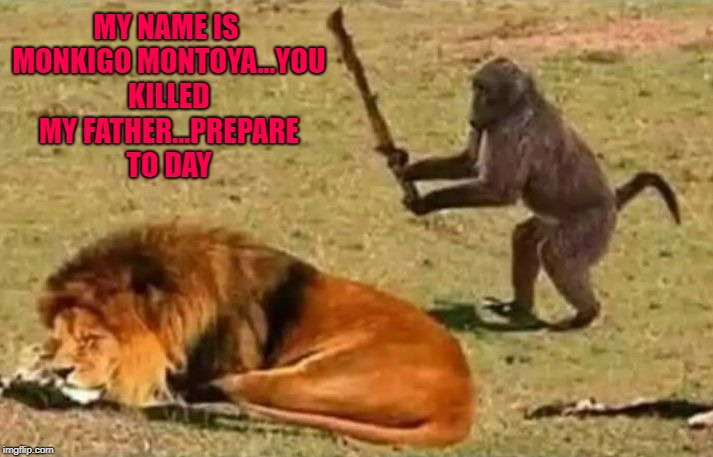 Sadly, Monkigo was never seen again... |  MY NAME IS MONKIGO MONTOYA...YOU KILLED MY FATHER...PREPARE TO DAY | image tagged in drunk monkey,memes,monkey,funny,lion,suicide | made w/ Imgflip meme maker