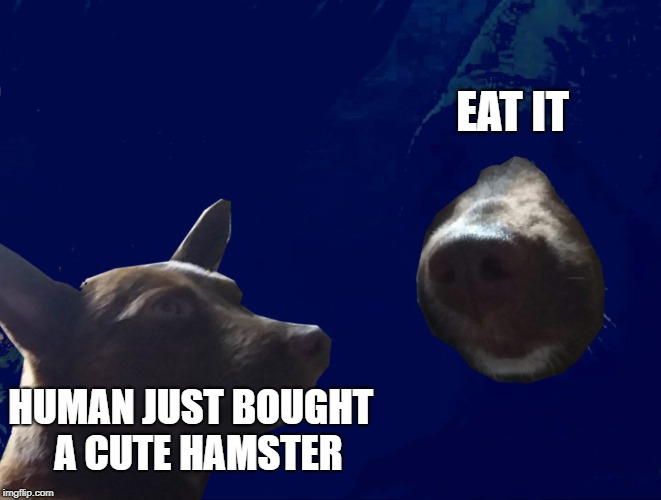 EAT IT HUMAN JUST BOUGHT  A CUTE HAMSTER | image tagged in darkside dog | made w/ Imgflip meme maker