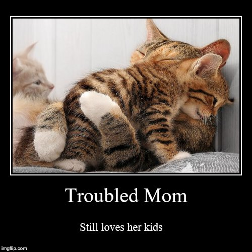 Mama Cat | Troubled Mom | Still loves her kids | image tagged in funny,demotivationals,cats,cat | made w/ Imgflip demotivational maker