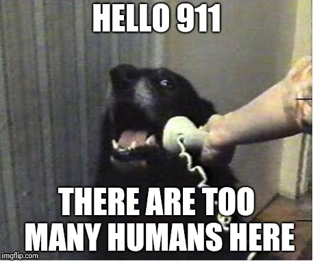 It's for you | HELLO 911 THERE ARE TOO MANY HUMANS HERE | image tagged in it's for you | made w/ Imgflip meme maker