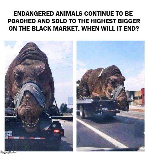 Upvote This Meme If You're As Outraged As I Am. | ENDANGERED ANIMALS CONTINUE TO BE POACHED AND SOLD TO THE HIGHEST BIGGER ON THE BLACK MARKET. WHEN WILL IT END? | image tagged in memes,endangered animals,animals,cruel,humanity,hunting | made w/ Imgflip meme maker