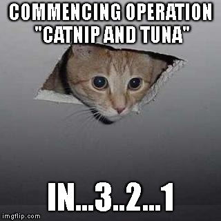 "Ceiling Cat | COMMENCING OPERATION ""CATNIP AND TUNA"" IN...3..2...1 