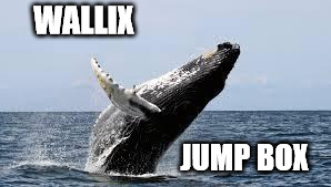 Whale. | WALLIX JUMP BOX | image tagged in whale | made w/ Imgflip meme maker