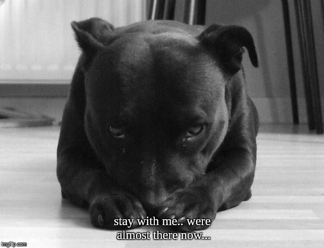 stay with me.. were almost there now... | stay with me.. were almost there now... | image tagged in dogs,funny dogs,angels,potus45,america,american revolution | made w/ Imgflip meme maker