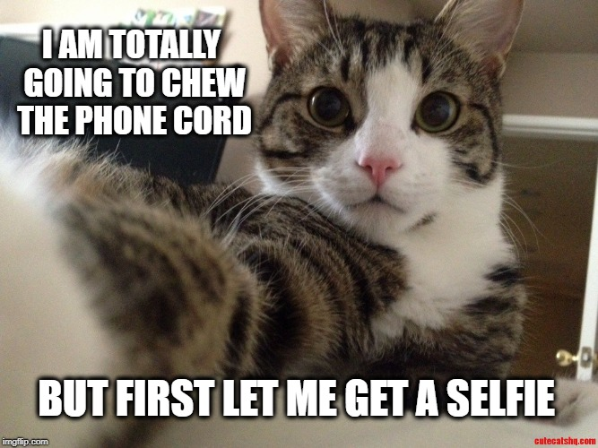 I AM TOTALLY GOING TO CHEW THE PHONE CORD BUT FIRST LET ME GET A SELFIE | image tagged in cat meme,funny cat,chew,phone frustration,selfie,bad kitty | made w/ Imgflip meme maker