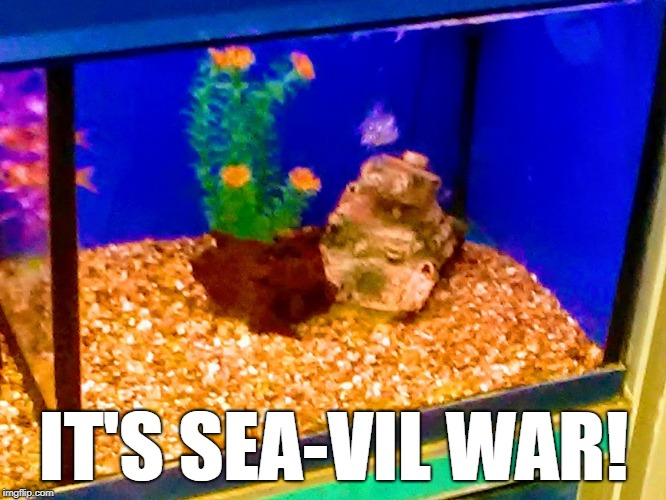 IT'S SEA-VIL WAR! | image tagged in funny | made w/ Imgflip meme maker