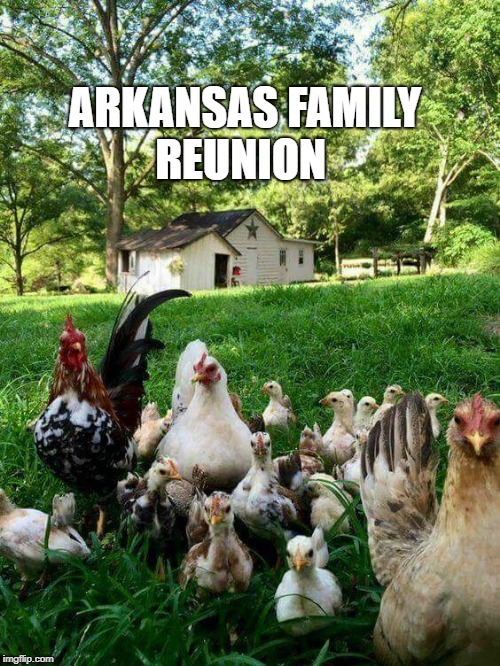 family reunion  | ARKANSAS FAMILY REUNION | image tagged in reunion,chicks,arkansas | made w/ Imgflip meme maker