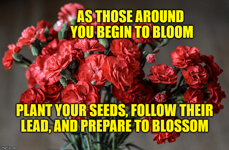 Blooming | AS THOSE AROUND YOU BEGIN TO BLOOM PLANT YOUR SEEDS, FOLLOW THEIR LEAD, AND PREPARE TO BLOSSOM | image tagged in blooming,life,goals,motivation,inspirational,focus | made w/ Imgflip meme maker