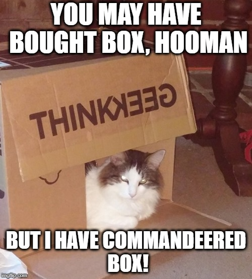Box Cat | YOU MAY HAVE BOUGHT BOX, HOOMAN BUT I HAVE COMMANDEERED BOX! | image tagged in cat,cats,funny cats,cat in a box | made w/ Imgflip meme maker