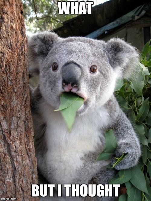 Surprised Koala Meme |  WHAT; BUT I THOUGHT | image tagged in memes,surprised koala | made w/ Imgflip meme maker