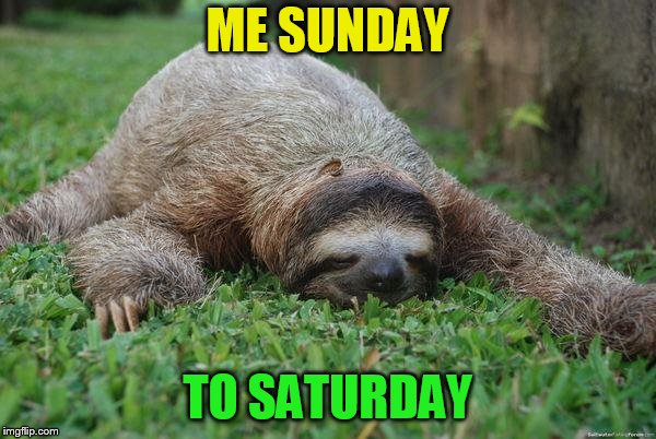 Sleeping sloth | ME SUNDAY TO SATURDAY | image tagged in sleeping sloth | made w/ Imgflip meme maker