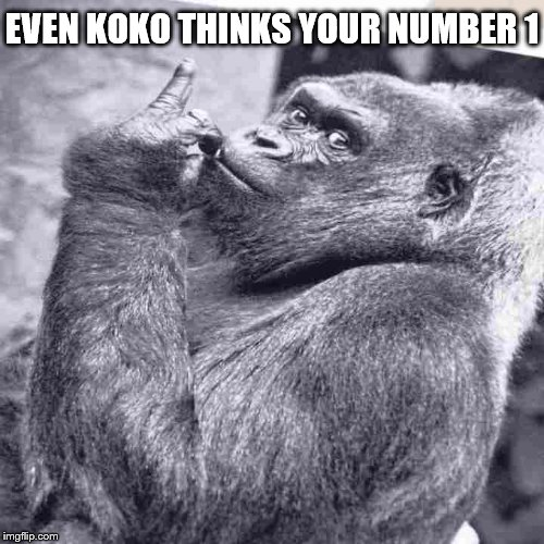 EVEN KOKO THINKS YOUR NUMBER 1 | made w/ Imgflip meme maker