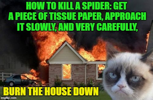 Free advice | HOW TO KILL A SPIDER: GET A PIECE OF TISSUE PAPER, APPROACH IT SLOWLY, AND VERY CAREFULLY, BURN THE HOUSE DOWN | image tagged in memes,burn kitty,grumpy cat,funny,spider | made w/ Imgflip meme maker