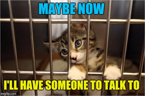 cat jail | MAYBE NOW I'LL HAVE SOMEONE TO TALK TO | image tagged in cat jail | made w/ Imgflip meme maker