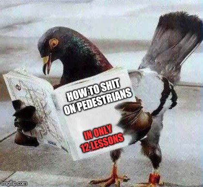 Pigeons can read, what do you mean? | HOW TO SHIT ON PEDESTRIANS IN ONLY 12 LESSONS | image tagged in pigeon reading book,memes,ilikepie314159265358979 | made w/ Imgflip meme maker