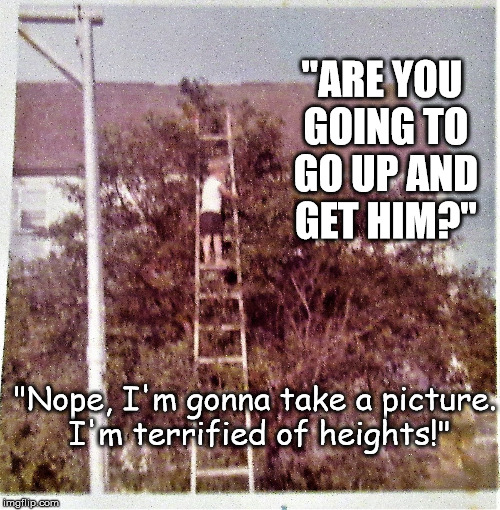 """ARE YOU GOING TO GO UP AND GET HIM?"" ""Nope, I'm gonna take a picture. I'm terrified of heights!"" 
