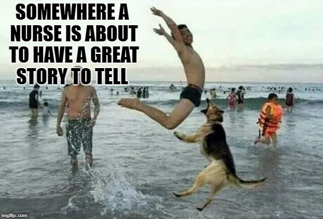 oh oh ! | SOMEWHERE A NURSE IS ABOUT TO HAVE A GREAT STORY TO TELL | image tagged in funny,dog,water | made w/ Imgflip meme maker