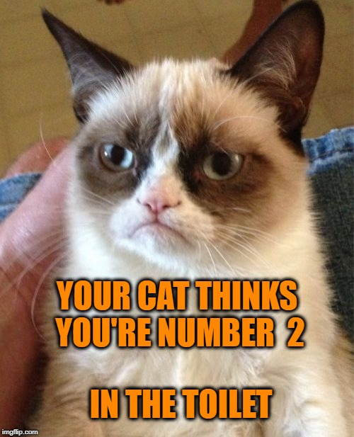 Grumpy Cat Meme | IN THE TOILET YOUR CAT THINKS YOU'RE NUMBER  2 | image tagged in memes,grumpy cat | made w/ Imgflip meme maker