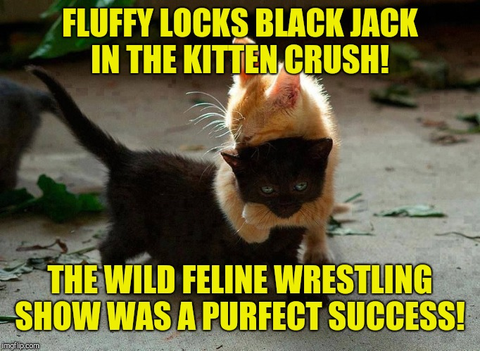 Just add kittens!  | FLUFFY LOCKS BLACK JACK IN THE KITTEN CRUSH! THE WILD FELINE WRESTLING SHOW WAS A PURFECT SUCCESS! | image tagged in kitten hug,wrestling,kitten | made w/ Imgflip meme maker