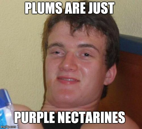 Maybe plums *are* nectarines, and they dyed them purple. (Is that even possible?) | PLUMS ARE JUST PURPLE NECTARINES | image tagged in memes,10 guy,plum,plums,fruit | made w/ Imgflip meme maker