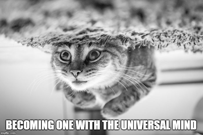 Meaaaaauuuuummmmm.....  | BECOMING ONE WITH THE UNIVERSAL MIND | image tagged in cat,universe,spirituality,oneness,meditation,much wow | made w/ Imgflip meme maker