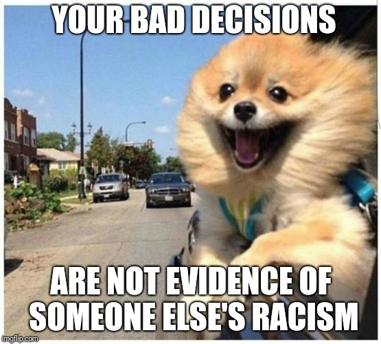The medical profession is racist because African-American didn't accept pre-natal care and died? | YOUR BAD DECISIONS ARE NOT EVIDENCE OF SOMEONE ELSE'S RACISM | image tagged in bad decisions dog | made w/ Imgflip meme maker