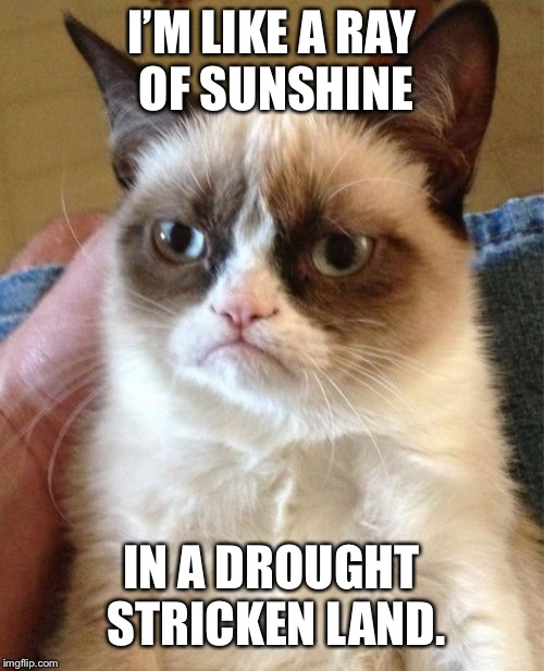 Grumpy Cat Meme | I'M LIKE A RAY OF SUNSHINE IN A DROUGHT STRICKEN LAND. | image tagged in memes,grumpy cat | made w/ Imgflip meme maker