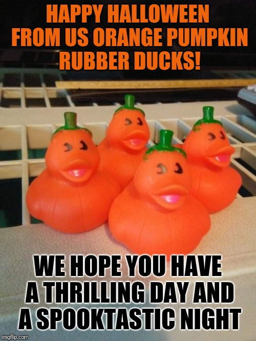 HAPPY HALLOWEEN FROM US ORANGE PUMPKIN RUBBER DUCKS! WE HOPE YOU HAVE A THRILLING DAY AND A SPOOKTASTIC NIGHT | image tagged in orange pumpkin rubber ducks | made w/ Imgflip meme maker