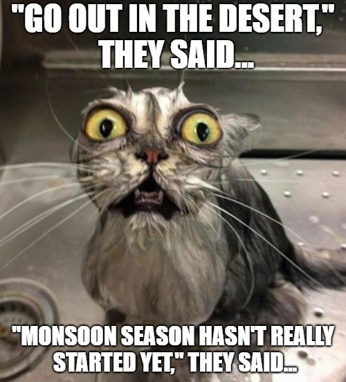 """GO OUT IN THE DESERT,"" THEY SAID... ""MONSOON SEASON HASN'T REALLY STARTED YET,"" THEY SAID... 