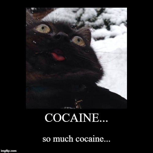 COCAINE... | so much cocaine... | image tagged in funny,demotivationals,cat,cocaine,snow | made w/ Imgflip demotivational maker