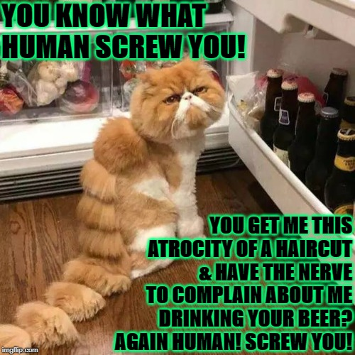 YOU KNOW WHAT HUMAN SCREW YOU! YOU GET ME THIS ATROCITY OF A HAIRCUT & HAVE THE NERVE TO COMPLAIN ABOUT ME DRINKING YOUR BEER? AGAIN HUMAN!  | image tagged in a beer please | made w/ Imgflip meme maker