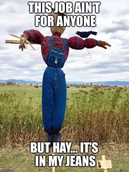 LOLOLOLOL | THIS JOB AIN'T FOR ANYONE BUT HAY... IT'S IN MY JEANS | image tagged in hay | made w/ Imgflip meme maker