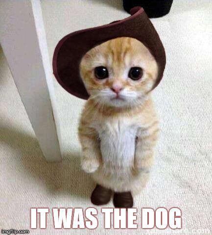 Cute Cat | IT WAS THE DOG | image tagged in cute cat | made w/ Imgflip meme maker