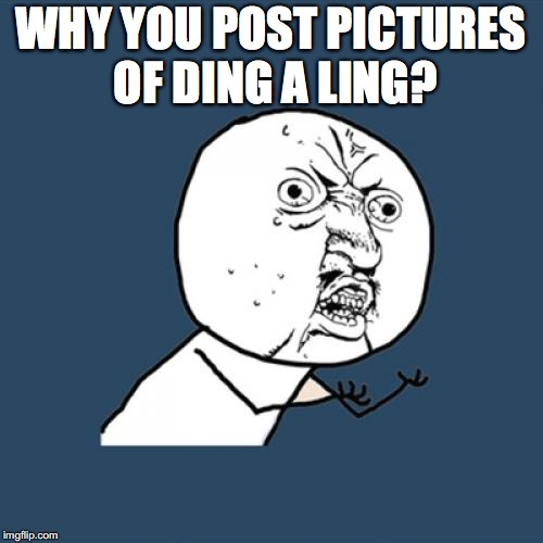 Y U No Meme | WHY YOU POST PICTURES OF DING A LING? | image tagged in memes,y u no | made w/ Imgflip meme maker